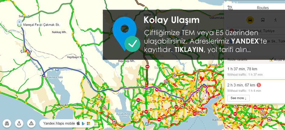 Yerli Kurban | Çatalca | Süleyman Kulaber